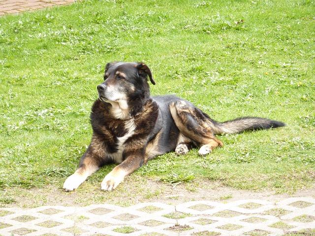 dog-22771_640
